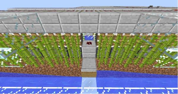 我的世界全自动甘蔗农场