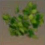 迷你世界雨林乔木树叶怎么获得 雨林乔木树叶有什么用